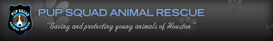 "PUP SQUAD ANIMAL RESCUE ""Saving & protecting young animals of Houston"""